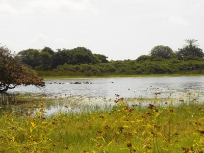 Lagoa com hipopótamos