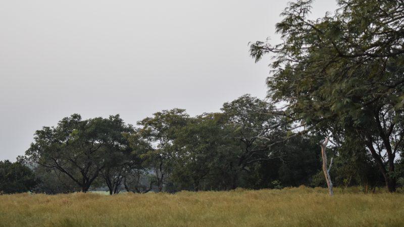National Park of Upper Niger